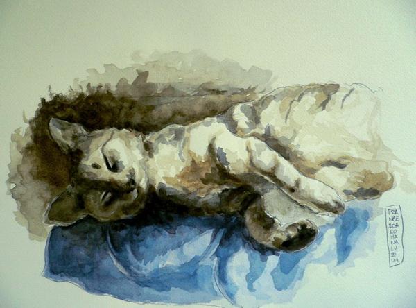 Francesca Romana Luzi - Illustrazione gatto