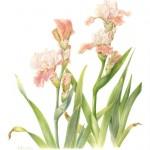 Corsi di disegno e acquerello botanico