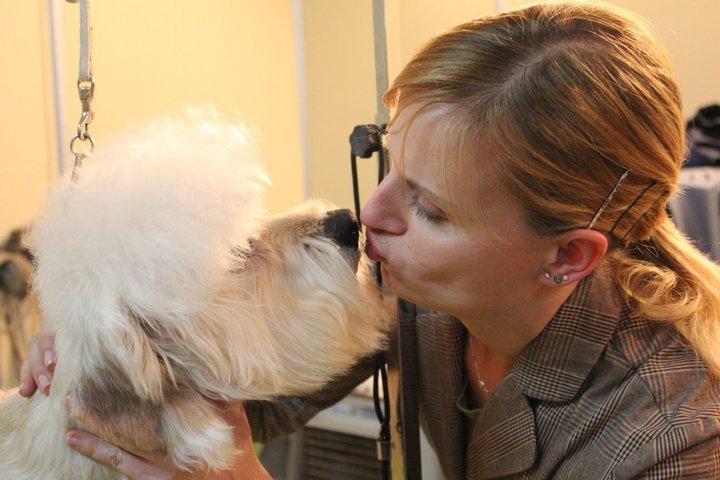 Dandie Dinmont Terrier Sunjoy's